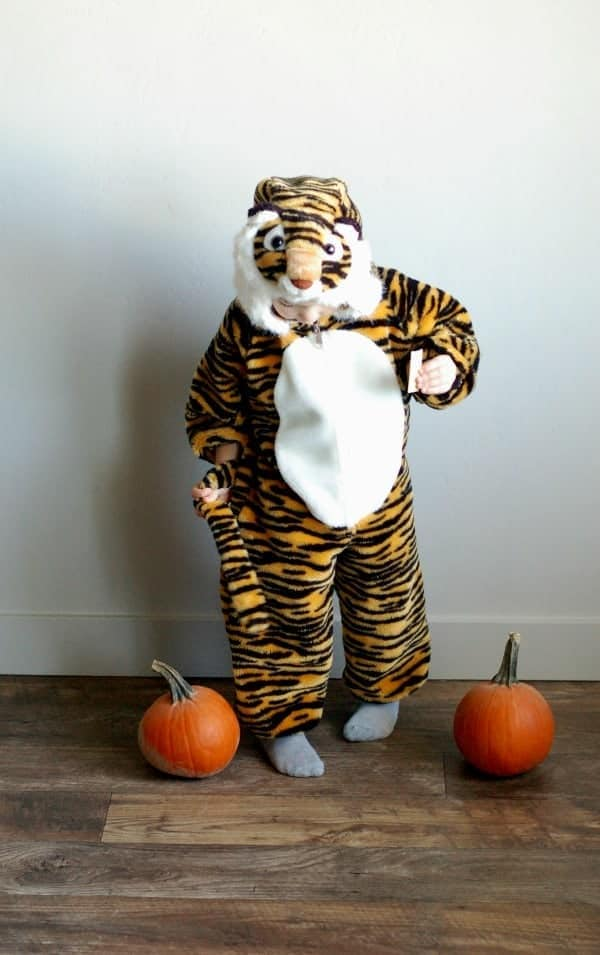 Little boy holds tail of tiger Halloween costume and stands next to two pumpkins.