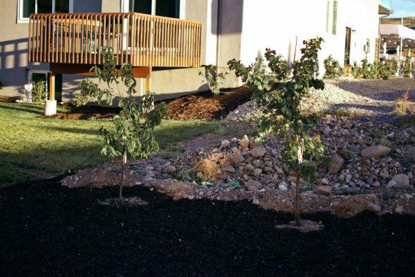 Fruit trees landscaping a sloped backyard