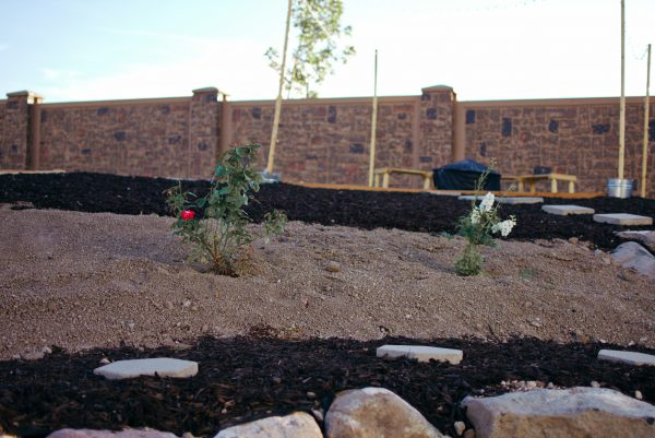 Roses and mulch for a sloped backyard makeover