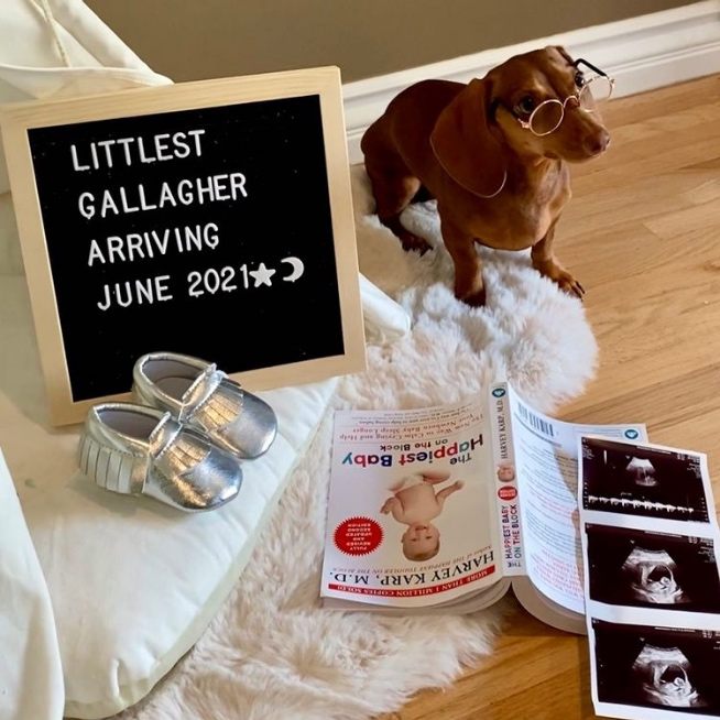 Dog stands next to letter board and ultrasound photo.