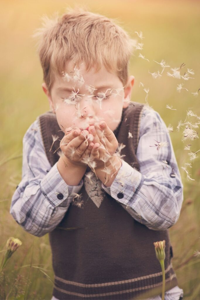 Little boy blows on dandelion flower.
